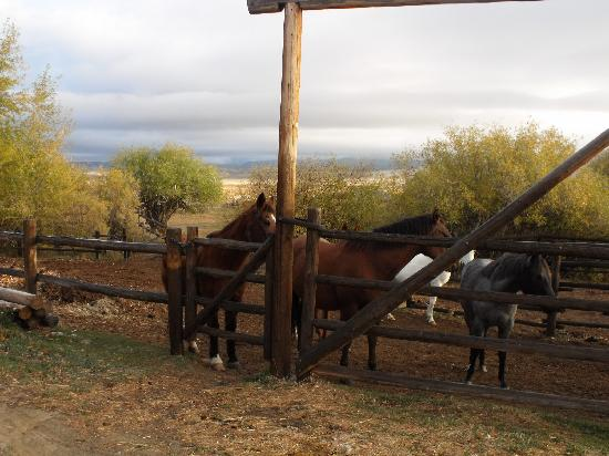 Pole Creek Ranch Bed and Breakfast: Our B&B is a working ranch