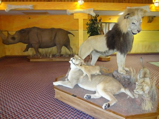 Kings Inn Cody Hotel: Lions & Rhino - Oh My!