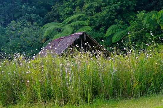 Borneo Highlands Resort : a small hut