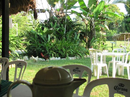 Cabanas Safari : Nice lush grounds