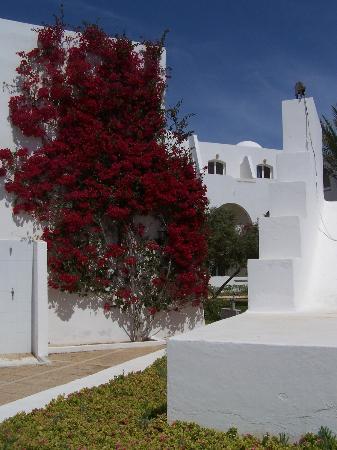 Hotel Djerba Haroun: jardins en fleurs