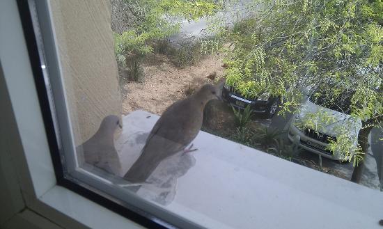 Arabian Ranches Golf Club Hotel: Birds eye view