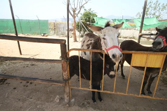 Nerja Donkey Sanctuary : Chica and foal