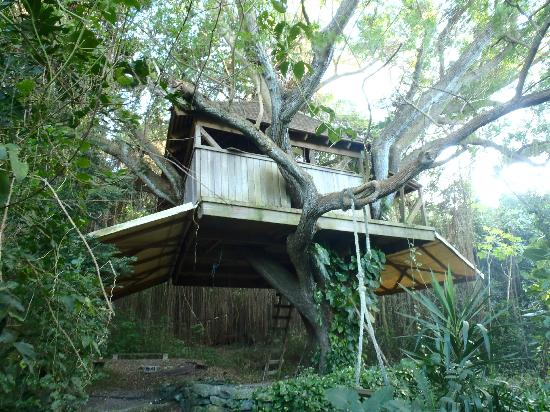 Ridge to Reef Farm at VISFI: Tree House