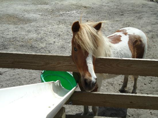 Popcorn Park Zoo: Pony