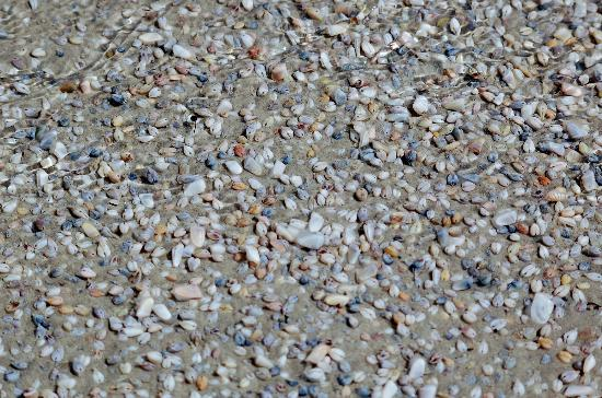 Padre Island National Seashore: Shells at Padre Island