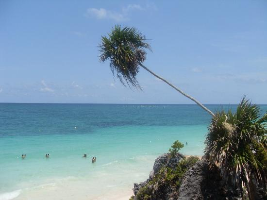 Safari Tulum Travel Services
