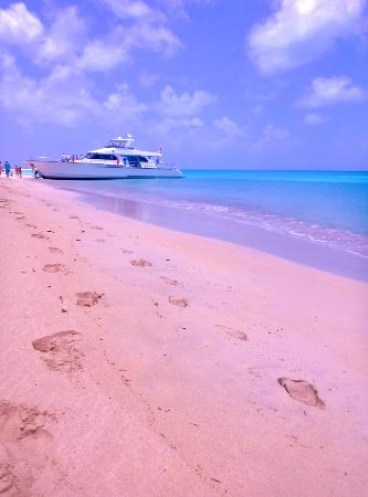barbuda beautiful pink beach and the excellence - Picture ...