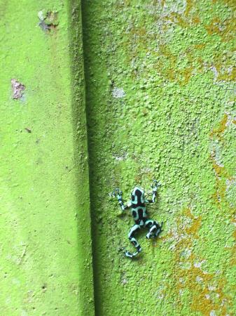 Casas La Selvatica: dart frog in yard
