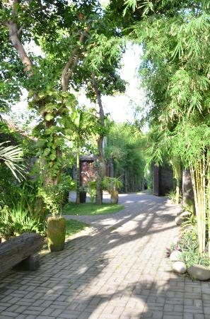 Mango Tree Villas: Small road leading to the villa