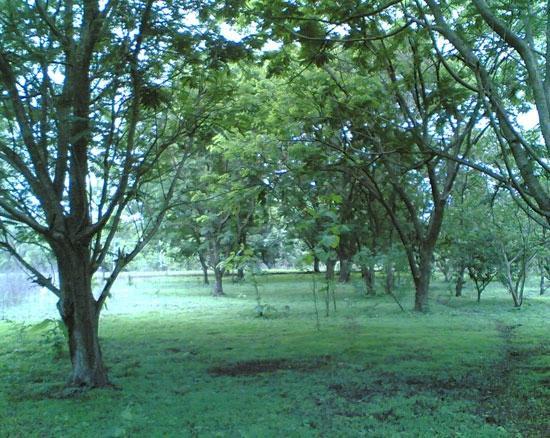 Harshgiri Lake Resort: Plantations