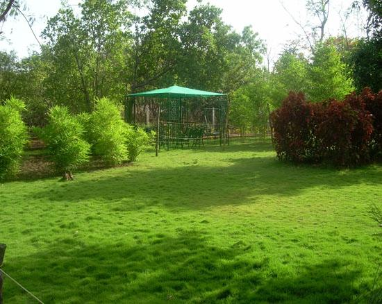new garden - Picture of Harshgiri Lake Resort, Thane - TripAdvisor