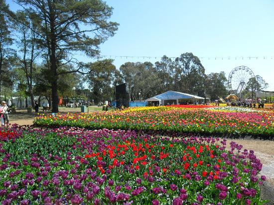 Car Parking Floriade Canberra