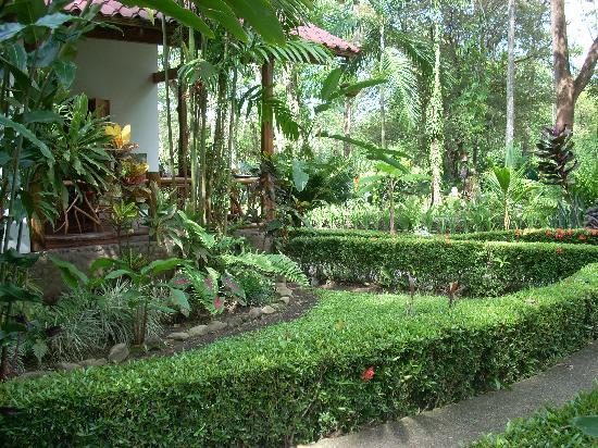 Hotel La Palapa Eco Lodge Resort: Garden - La Palapa Ecolodge Resort.