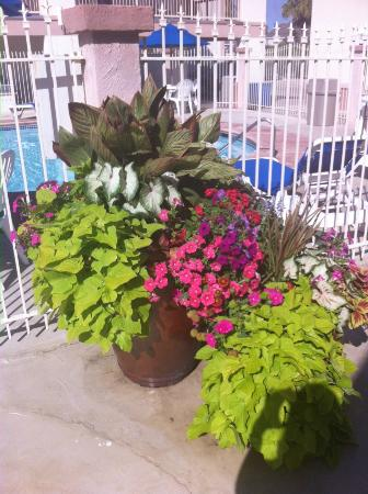 Best Western Port Aransas Pretty Potted Plants By Pool