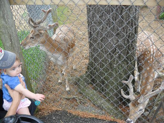York S Wild Kingdom Zoo And Fun Park Deer