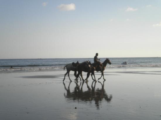 Hotel Belvedere - Playa Samara: Caballos en la playa Samara
