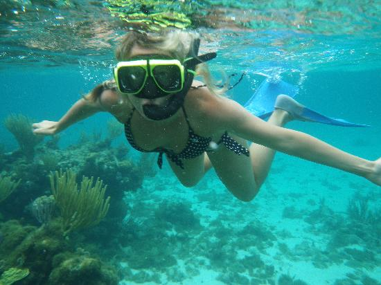 Acquarius Sea Tours Snorkel The Reef After Visiting Stingray City Grand Cayman