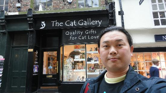 The Cat Gallery: York's loverest place