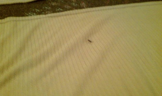 Holiday Inn Express Nashville Airport: Giant Ant #2