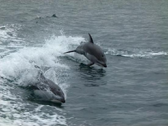 Brown's Bay Resort: dolphins alway in for some play