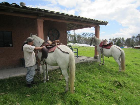 Ali Shungu Mountaintop Lodge: Jose Maria adjusting my stirrups
