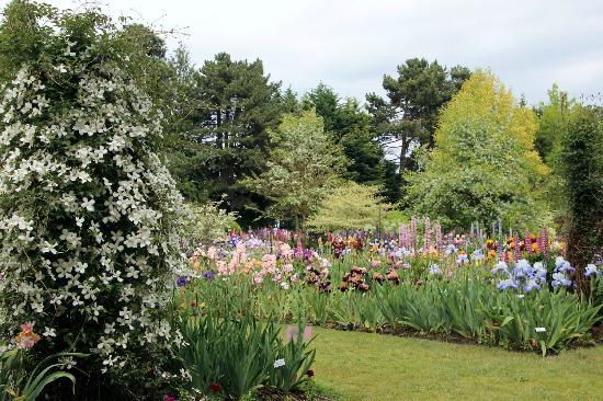 Schreiner's Iris Gardens: View in the Garden