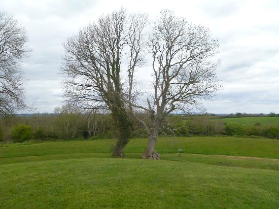 Navan Centre and Fort: trees look like they're dancing