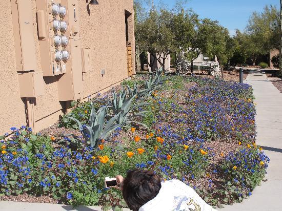 Mira Vista Resort: Shooting the Wildflowers in February