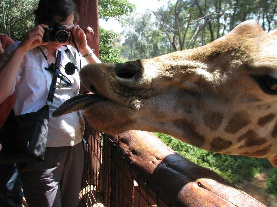 Nairobi Urban Adventures: Kelly!