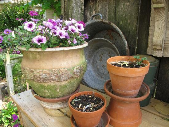 Piney Hill Bed & Breakfast: Garden pots
