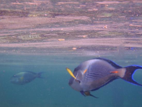 Rixos Sharm El Sheikh: Under Water World