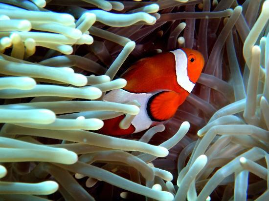 Liberty Dive Resort: Found Nemo