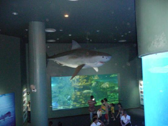 National Oceanographic Museum of Vietnam: внутри музея
