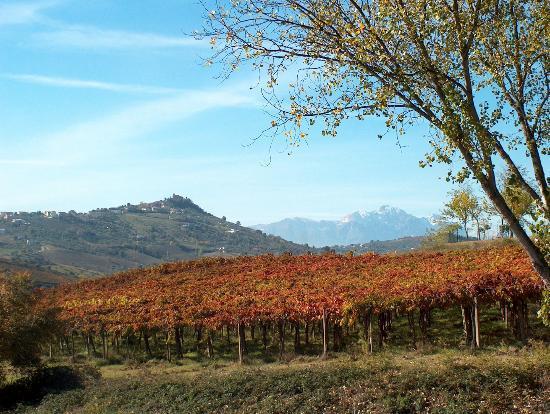 Azienda Agrituristica Terre Del Sole: vista