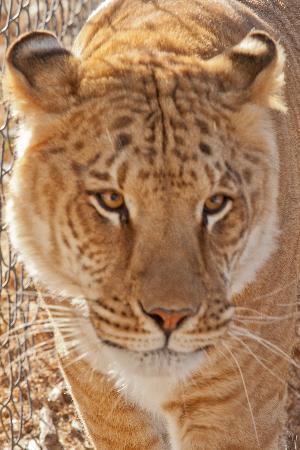 Serenity Springs Wildlife Center: Shakira