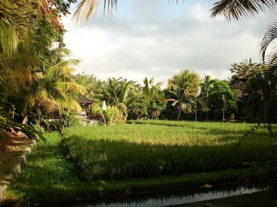 Gerebig Bungalows : les rizières pour horizon...
