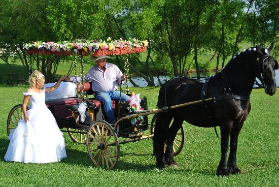 Clearview Horse Farm B&B: Our Horse & Carriage