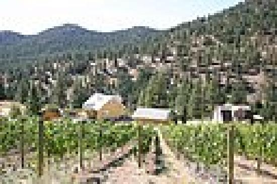 Grape Escape Guest House: As seen from top of vineyard