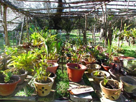 Batu Ritung Lodge: Nursery