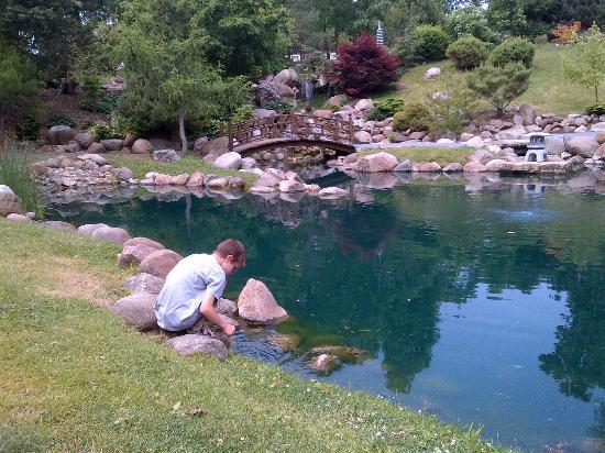 Dubuque Arboretum and Botanical Gardens: Feeding the Coy Fish