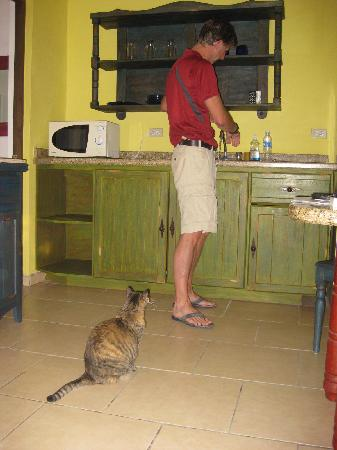 Siesta Suites: Local cat hanging out in the Kithen