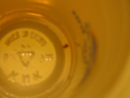 Americas Best Value Inn & Suites-SOMA: A bedbug, found in my pillowcase and caught in a plastic cup