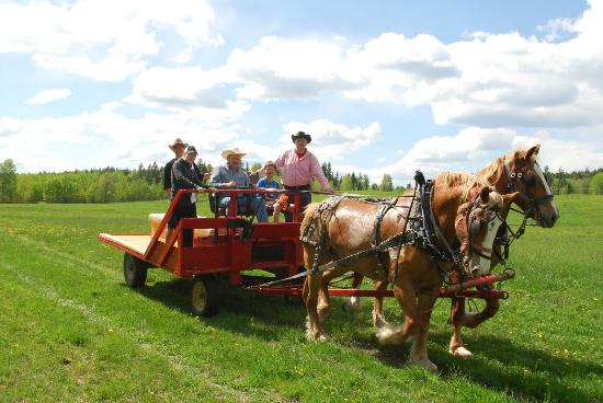 Spring Lake Ranch Bed & Breakfast: Hay Ride