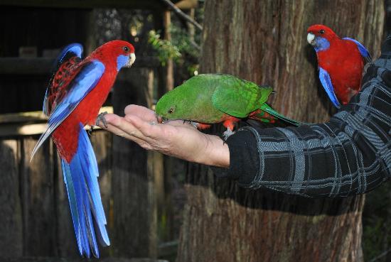 Jemby-Rinjah Eco Lodge: Bird feeding area