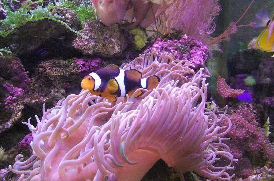 New Mexico Museum of Natural History and Science: Aquarium