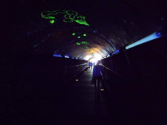 Cijin Seaside Park: 岩場へ向かうトンネル(星座ライトアップ)