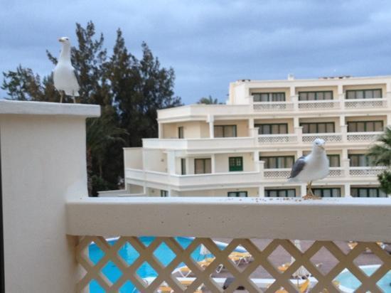 IBEROSTAR Lanzarote Park - TEMPORARILY CLOSED: gulls visiting daily!!!