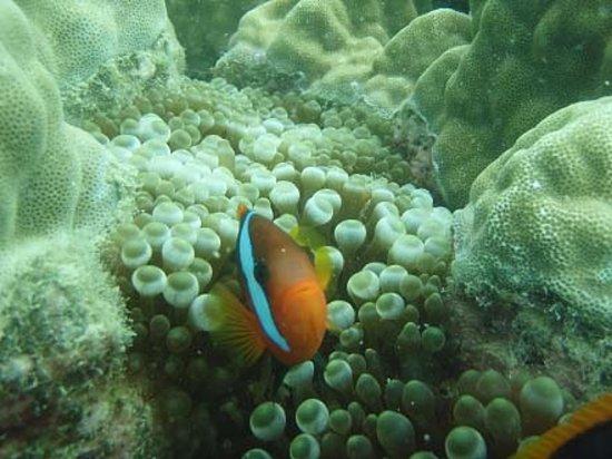 Blue Pearl Bay Snorkeling Adventure: We found Nemo