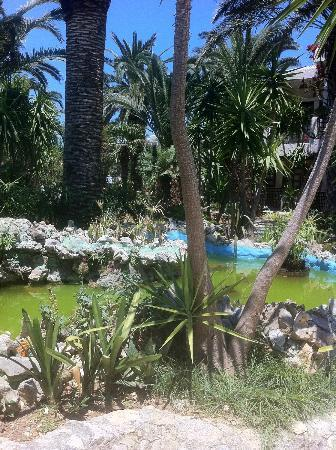 Sandy Beach Hotel: Frog pond
